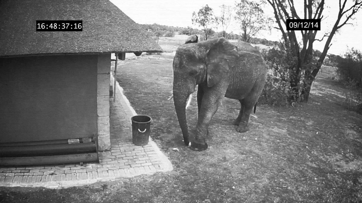 ANIMAL FAZ O QUE HOMEM NÃO FAZ: Elefante jogando papéis no lixo – VEJA VÍDEO