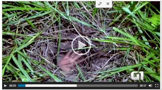 VEJA VÍDEO: Detento fica preso em túnel durante fuga em penitenciária do RN