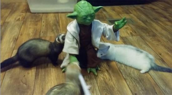 """Cena que mostra personagem do filme """"Star Wars"""" lutando contra três animais gera milhões de acesso na internet – VEJA VÍDEO"""