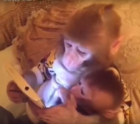 macaco-esperto (1)