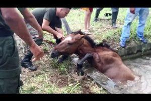VEJA VÍDEO – Cavalo cai em tanque e mobiliza equipe de resgate