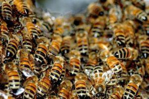 Mulher sofre ataque de abelhas na capital e é ferroada mais de 30 vezes