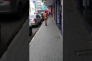 VEJA VÍDEO – Homem é flagrado caminhando nu pelas ruas do centro de cidade do interior de Pernambuco