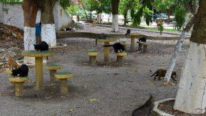 wp 20170315 14 40 58 pro 300x169 - Mulher abriga 40 gatos em apartamento e causa guerra entre vizinhos