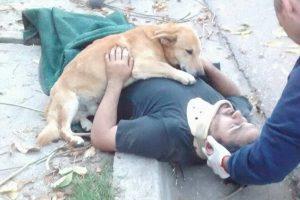 Cachorro se recusa a deixar o dono após ele desmaiar em acidente