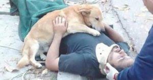 cão abraça dono 300x157 - EMOCIONANTE: cão abraça o dono após este sofrer acidente