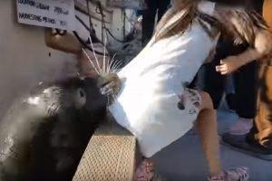 Menina puxada por leão-marinho está com infecção rara; veja vídeo