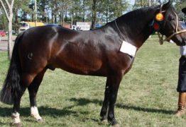 REPRODUTOR: cavalo morre um mês após ser comprado por 7 milhões