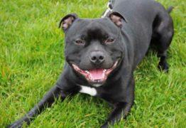 Cão mata dono após consumir crack em gravação de documentário da BBC