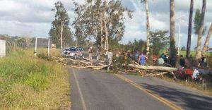TRAGÉDIA: Idoso morre após árvore cair em cima dele; nora infarta e morre ao receber notícia
