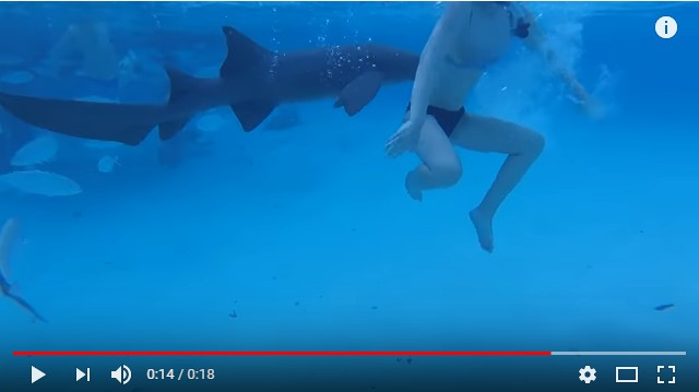 Marido filma esposa sendo atacada por tubarão durante viagem de lua de mel