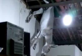 BURRO VOADOR ?: População de Cajazeiras se reúne para tirar jumento de um telhado – VEJA VÍDEO