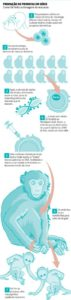 clonagem primatas 71x300 - Cientistas chineses conseguem clonar primatas pela primeira vez na história