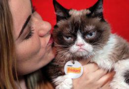 A Grumpy Cat acaba de ganhar US$ 710 mil de indenização por uso indevido de sua imagem