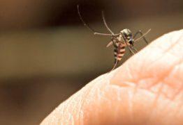 Mulher é internada com malária no HU em João Pessoa