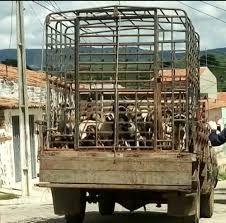 Prefeito de Igaracy afasta 'exterminador' de cães