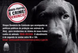 MAUS TRATOS É CRIME: Homem atira em animal e é preso em Juarez Távora
