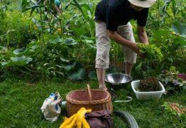 Câmara aprova projeto de lei que restringe venda direta de orgânicos