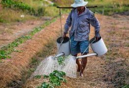 Região Nordeste perdeu 1 milhão de trabalhadores rurais de 2012 a 2017