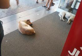UM REPOUSO NO CALOR: Cães de rua são autorizados a entrar em loja para fugirem de calor de quase 40°