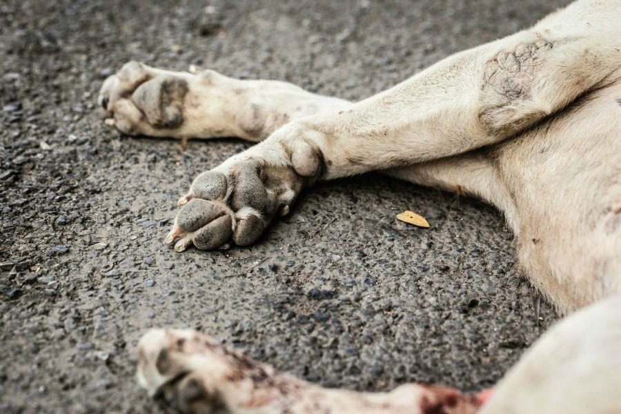 cachorro - Homem esfaqueia cachorro no meio da rua em Santa Rita