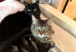 Não podem ser parte do processo: Justiça extingue ação movida por 22 gatos na Paraíba