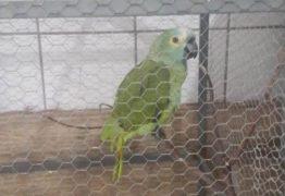 PAPAGAIO DO TRÁFICO: animal é apreendido após anunciar chegada de policiais: 'Mamãe, polícia!'