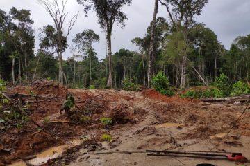 maquina prf3 360x240 - CORRUPÇÃO: Operação em 8 estados e no DF mira esquema de desmatamento ilegal na Amazônia