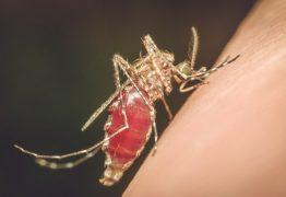 Venezuelana é internada com malária no Hospital Universitário