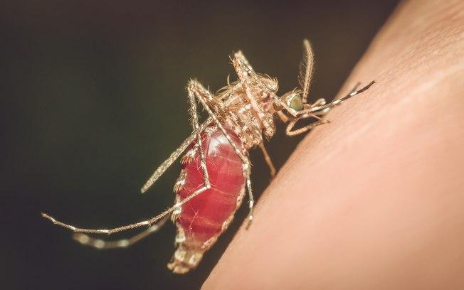 mosquito malária - Hospital Universitário regista 11º caso de malária na Paraíba