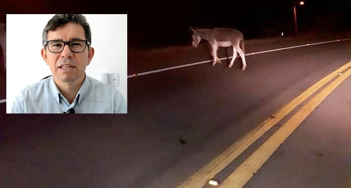 a766649429de6b562edc653e57d44a93 - Jornalista patoense sofre acidente na estrada ao tentar desviar de animal