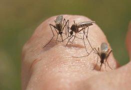 Mesmo com feriado prolongado, prefeitura afirma que ações de combate à malaria continuam no Conde