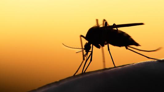 malaria mosquito ms interna - Hospital Universitário regista 13º caso de malária