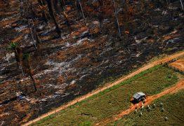 'AJUSTE LEGAL': Por estradas e portos, governo federal quer reduzir 60 florestas e reservas