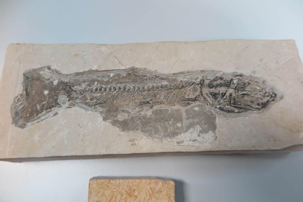 4898334 - COMÉRCIO ILEGAL: Fósseis de milhões de anos são vendidos por R$ 20 no Ceará