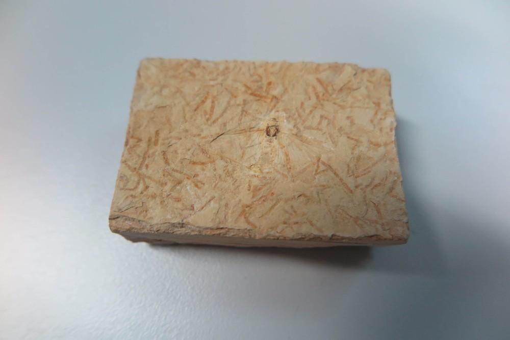 4898337 - COMÉRCIO ILEGAL: Fósseis de milhões de anos são vendidos por R$ 20 no Ceará