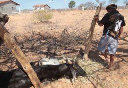 'Não se combate fome dizendo que ela não existe', diz ex-FAO
