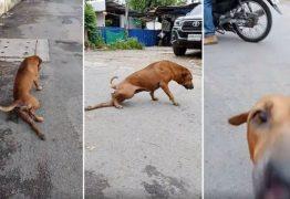 CÃO ATOR: animal finge ter a pata quebrada para ganhar comida e carinho – VEJA VÍDEO