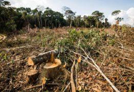 Municípios com maior número de queimadas tiveram as maiores taxas de desmatamento, diz pesquisa
