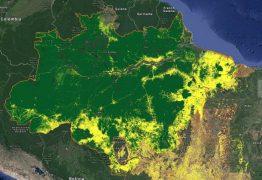 PREOCUPAÇÃO COM AUMENTO DE DESMATE: Alemanha suspende parte de verba que iria para a Amazônia