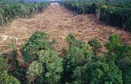 Sudeste será região mais afetada por desmate da Amazônia, diz líder do IPCC
