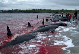 FAKE NEWS: Vídeo de caça às baleias que Bolsonaro postou não é da Noruega