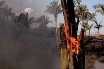 quatro estados pedem ajuda das forcas armadas para combate a incendi 19824142654 360x240 - Quatro estados pedem ajuda das Forças Armadas para combate a incêndios; saiba quais