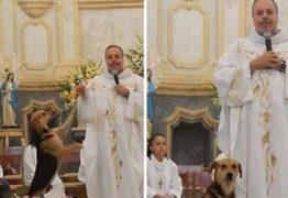 Padre salva cachorros, cuida e os leva nas missas para serem adotados