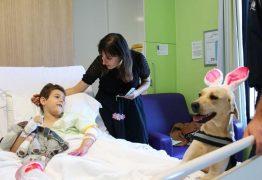 Câmara Municipal de João Pessoa prova projeto de lei que permite entrada de animais de estimação em hospitais