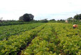 Paraíba será contemplada com fundo de incentivo à agricultura familiar