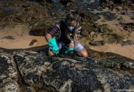 Estudo aponta que óleo que afeta o Nordeste pode vir de poço em alto-mar