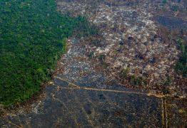 DEVASTAÇÃO NA AMAZÔNIA: desmatamento cresce 96% em setembro, alerta Inpe