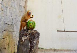 COMEMORAÇÃO AO HALLOWEEN: Animais do Novo Parque da Bica participam de atividade especial