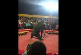 Urso ataca adestrador durante apresentação em circo – VEJA VÍDEO